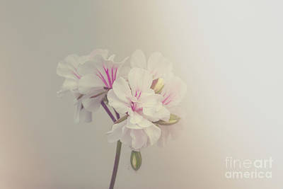 Photograph - Delicate Flower by Patricia Hofmeester