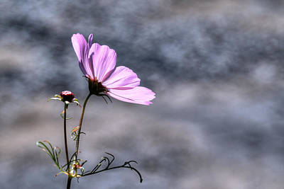 Digital Art - Delicate Flower by Patrick Groleau