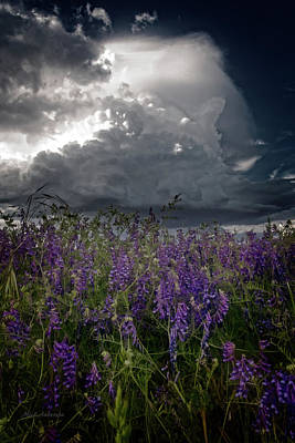 Photograph - Delicate Flowers And Building Thunder by Mick Anderson