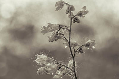 Photograph - Delicate Flowers by Roberto Pagani