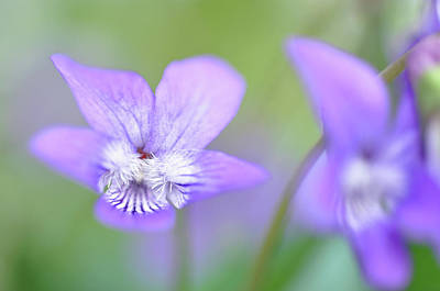Photograph - Delicate by Glenn Gordon