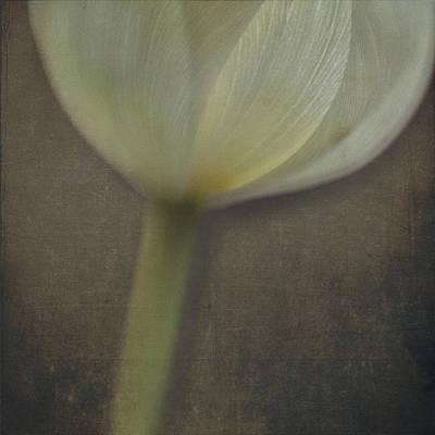 Photograph - Delicate Goblet by Kevin Bergen