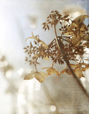 Gray Photograph - Delicate Hydrangea Blossoms In Earth Tones by Brooke T Ryan