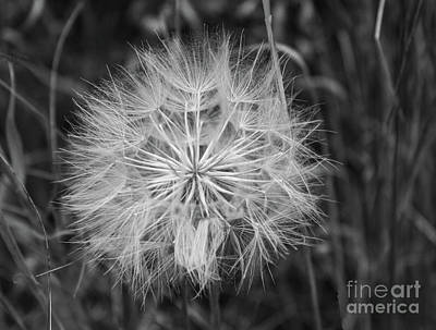 Photograph - Delicate In Black And White by Steven Parker