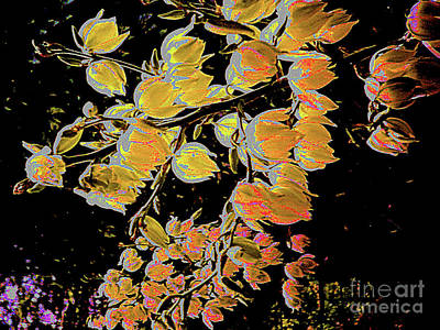 Digital Art - Delicate Japanese Spring Flowers by Merton Allen