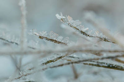 Photograph - Delicate Morning Frost  by Amber Flowers