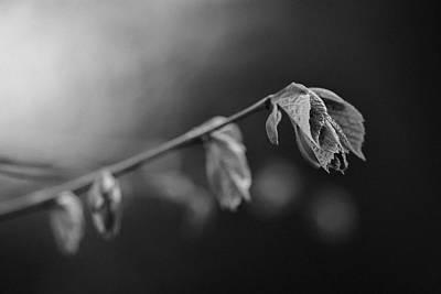 Photograph - Delicate Nature by Vincent Pelletier