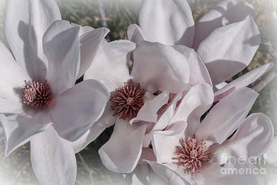 Photograph - Delicate Perfection by Claudia M Photography