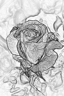 Photograph - Delicate Petals Drawing by Tikvah's Hope