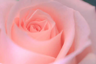 Photograph - Delicate Pink Rose by Joni Eskridge