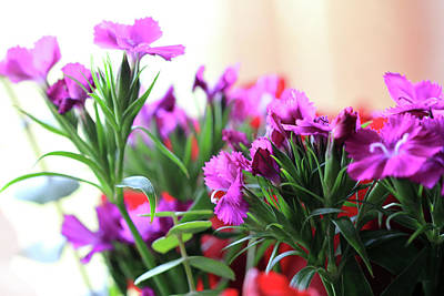 Photograph - Delicate Purple Flowers by Angela Murdock