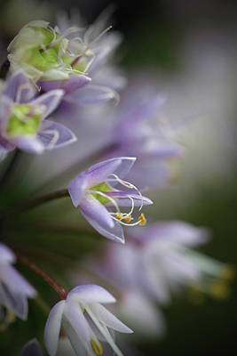 Photograph - Delicate Purple Flowers by Brooke T Ryan