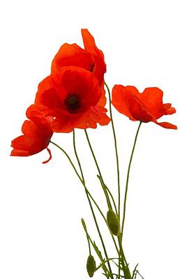 Digital Art - Delicate Red Poppies Vector by Tracey Harrington-Simpson