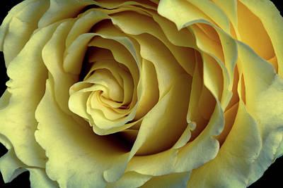 Delicate Rose Petals Art Print by Deborah Klubertanz
