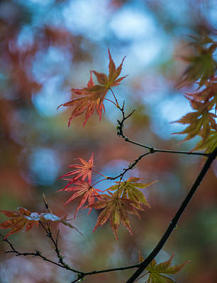Photograph - Delicate Signs Of Autumn by Mike Reid