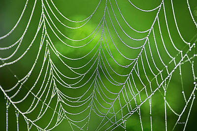 Photograph - Delicate Web Abstract by Christina Rollo