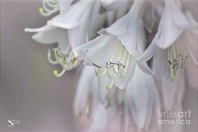 Photograph - Delicate White Flowers by Ms Judi