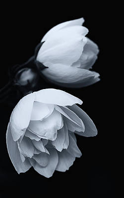 Photograph - Delicate White Surprise by Brad Koop