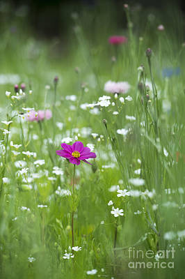 Delicate Wildflower Meadow Art Print