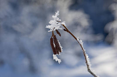 Delicate Winter Art Print by Mike  Dawson