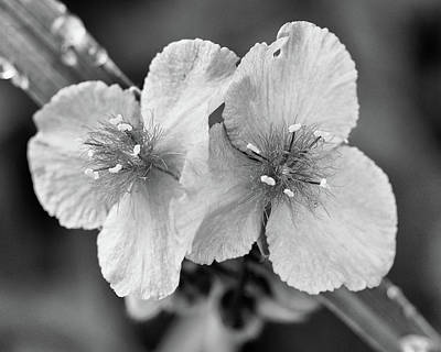 Photograph - delicate wonder No.2 by Tom Druin