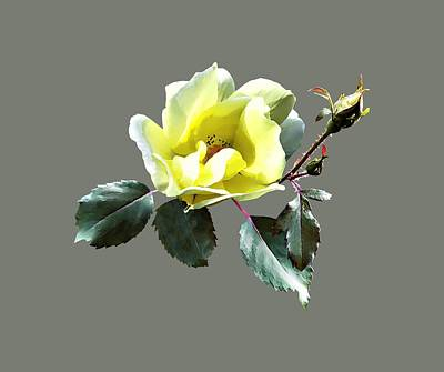 Photograph - Delicate Yellow Rose by Susan Savad