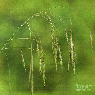 Photograph - Delicately by Liz Alderdice