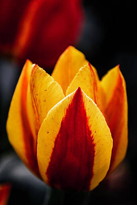 Mellow Yellow Rights Managed Images - Deliciosa Royalty-Free Image by Edward Kreis