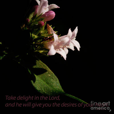 Photograph - Delight In The Lord by Sandra Clark