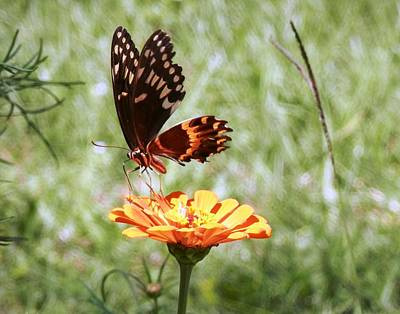 Photograph - Delightful Butterfly Capture by Belinda Lee