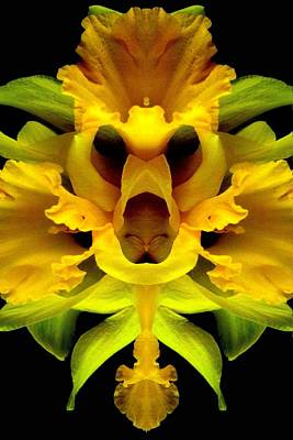 Photograph - Delightful Daffodil by Marianne Dow