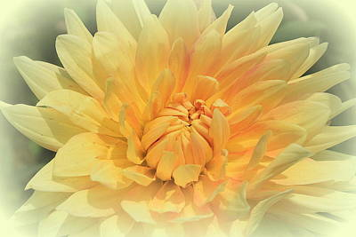 Photograph - Delightful Dahlia by Dora Sofia Caputo Photographic Design and Fine Art
