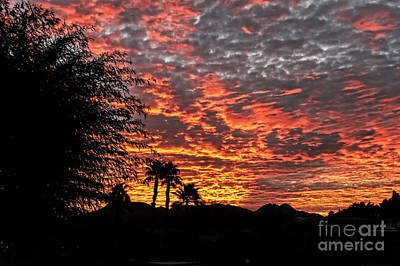 Art Print featuring the photograph Delightful Evening by Robert Bales