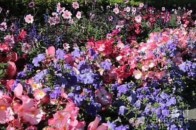 Blue Begonias Photograph - Delightful Flower Garden by Carol Groenen