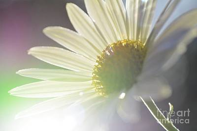 Photograph - Delightful Radiance by Kelly Nowak