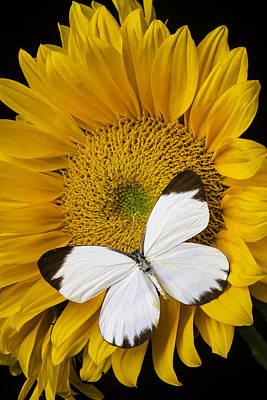 Delightful White Butterfly Art Print by Garry Gay