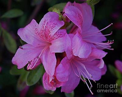 Photograph - Delightfully Pink by Patricia Strand