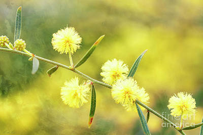 Art Print featuring the photograph Delights Of An Aussie Spring by Linda Lees