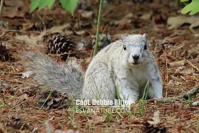 Photograph - Delmarva Fox Squirrel 3809 by Captain Debbie Ritter