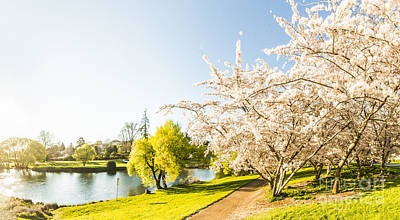 Spring Scenery Photograph - Deloraine Cherry Tree Panorama by Jorgo Photography - Wall Art Gallery