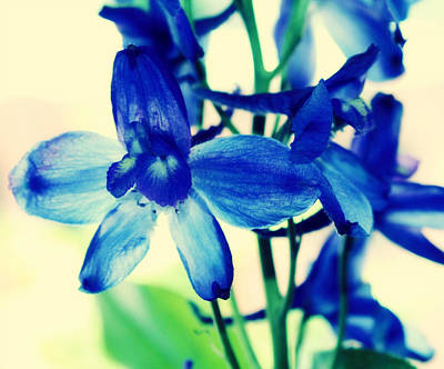 Delphinium Art Print by Cathie Tyler