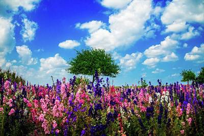 Photograph - Delphinium Daydreams by Lynn Bauer
