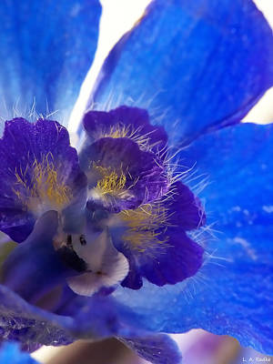 Photograph - Delphinium by Lauren Radke