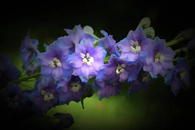 Photograph - Delphiniums by Donna Kennedy