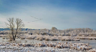 Photograph - Delta Frost by Wes and Dotty Weber