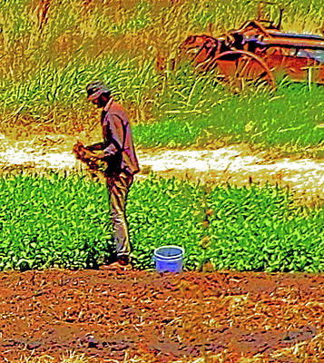 Photograph - Delta Organic Farmer by Joseph Coulombe