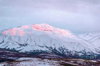 Photograph - Denali - Alpenglow 2 by Mary Carol Story