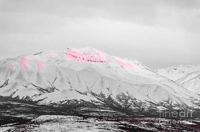 Photograph - Denali - Alpenglow 2 Sc by Mary Carol Story