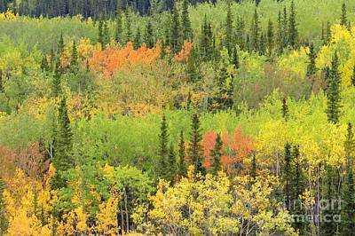 Photograph - Denali Autumn by Frank Townsley
