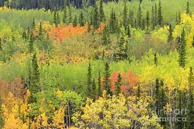Photograph - Denali Autumn by Frank Townsley